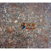 新疆棕钻超薄石材