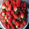 牛奶草莓苗多少钱 草莓苗哪家好