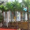 仿真椰子树厂家河南枫林定制室内外酒店宾馆广场**假椰子树