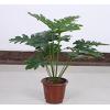 仿真绿植塑料盆家花草小盆栽假植物摆设盆景